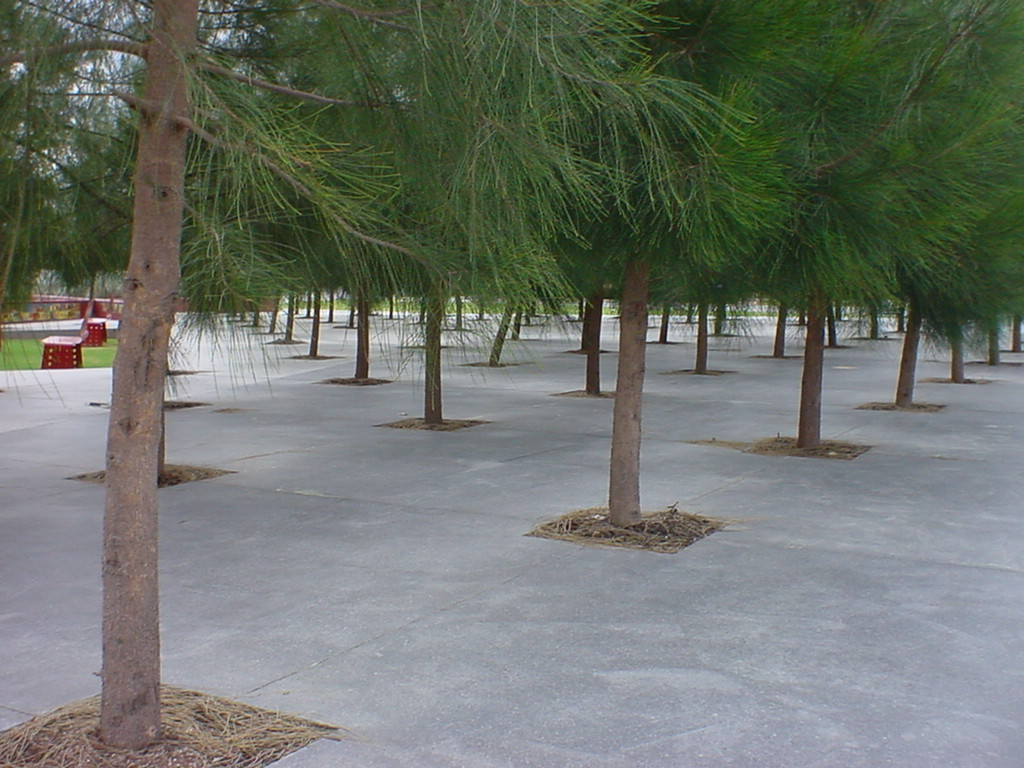 Trees In Concrete
