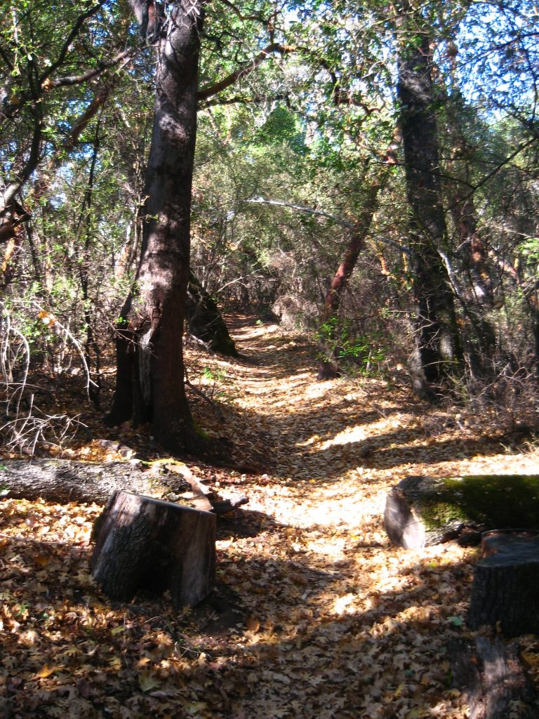 Leaf-Covered Trail