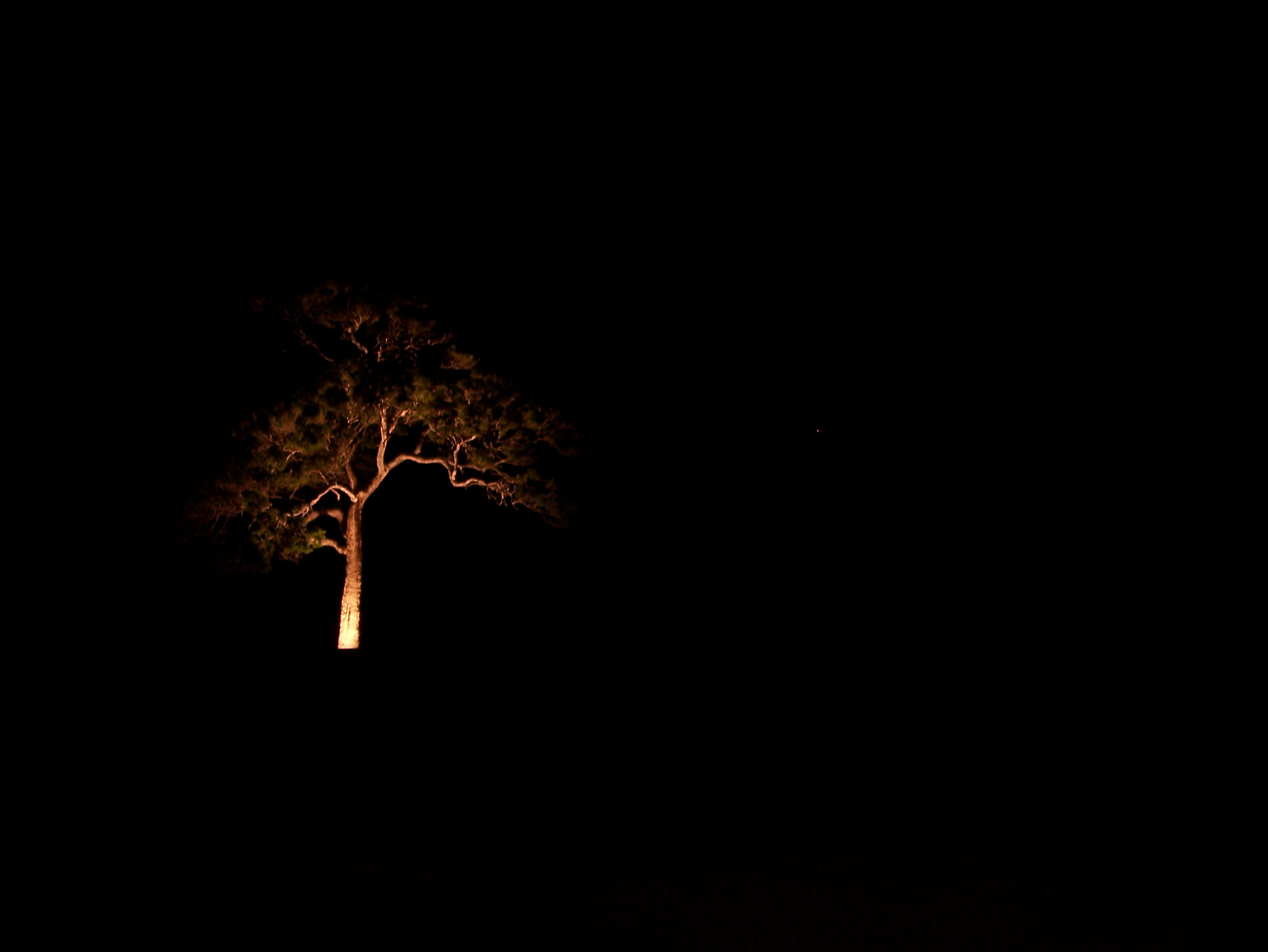 Lone Tree in the Dark
