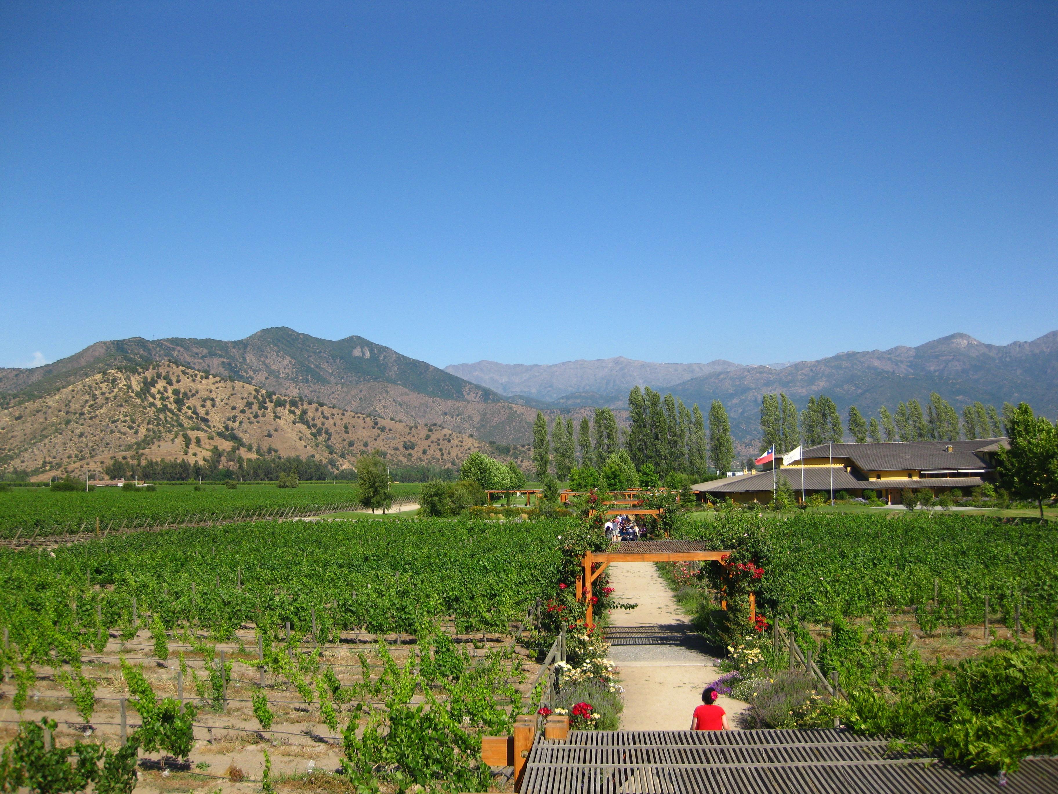 Wine Tour, Colchagua Valley
