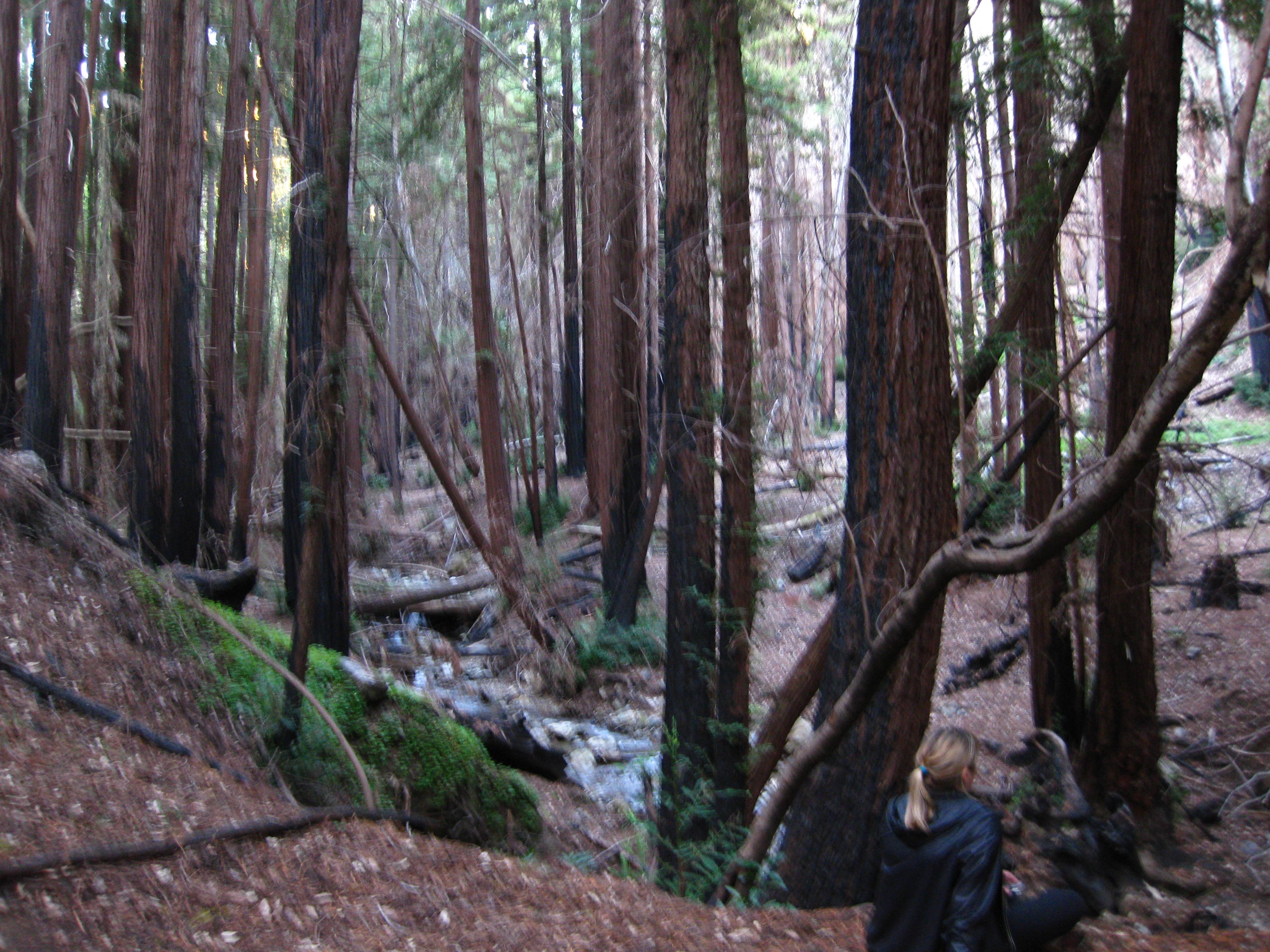 Big Sur, Bay Area Expeditions