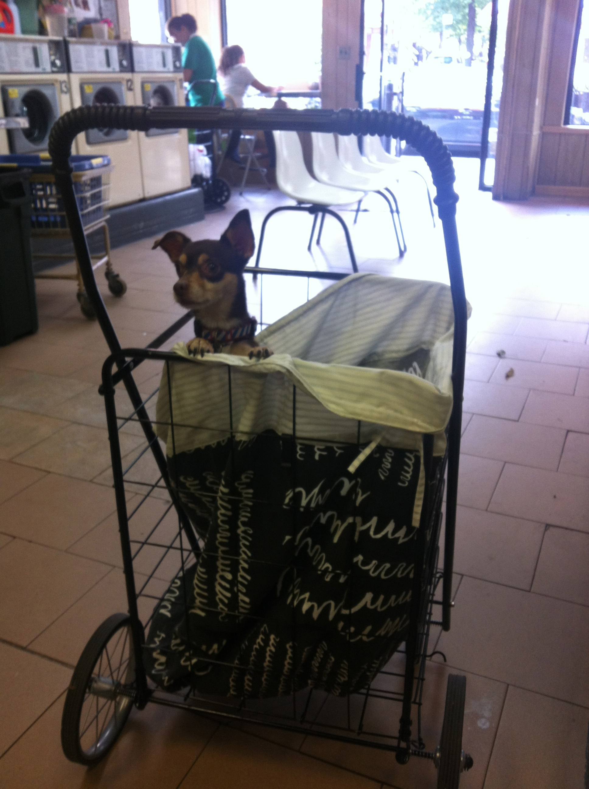Bambi in a Basket