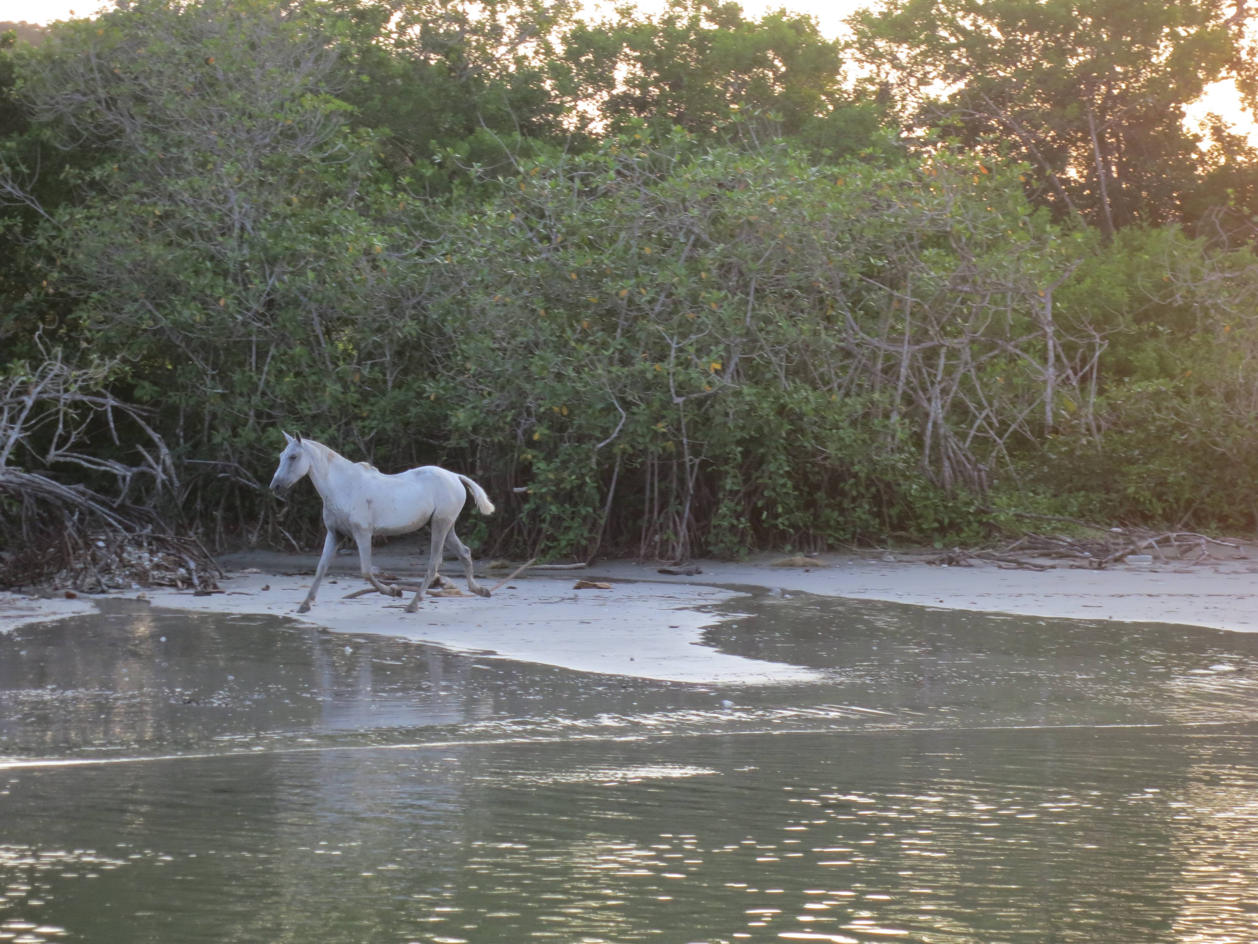 Wild Horse on the Beach