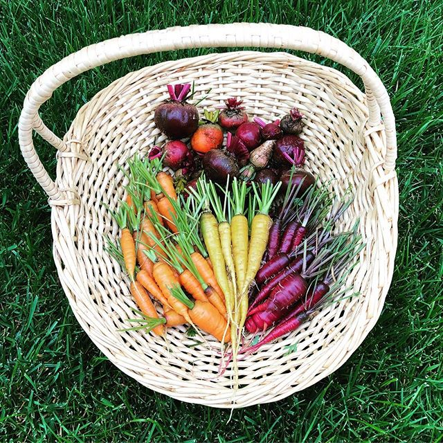 Today's harvest! #carrots #beets #veggiegarden #gardening #inmygarden